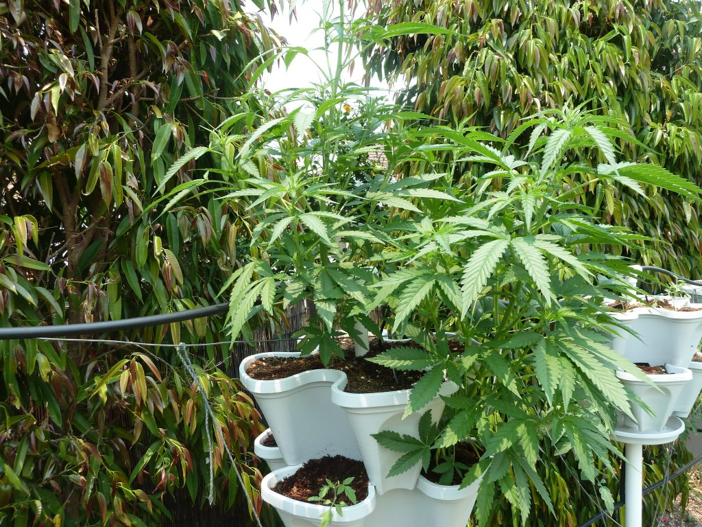 All About Hydroponic Nutrients