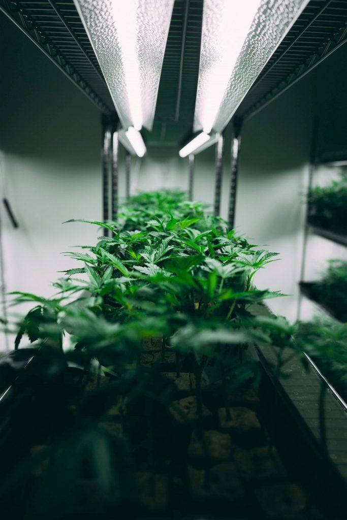 Grow Lighting