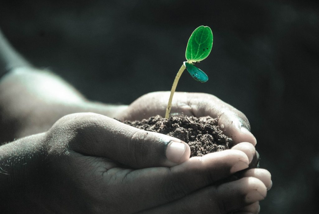 holding a tiny seedling