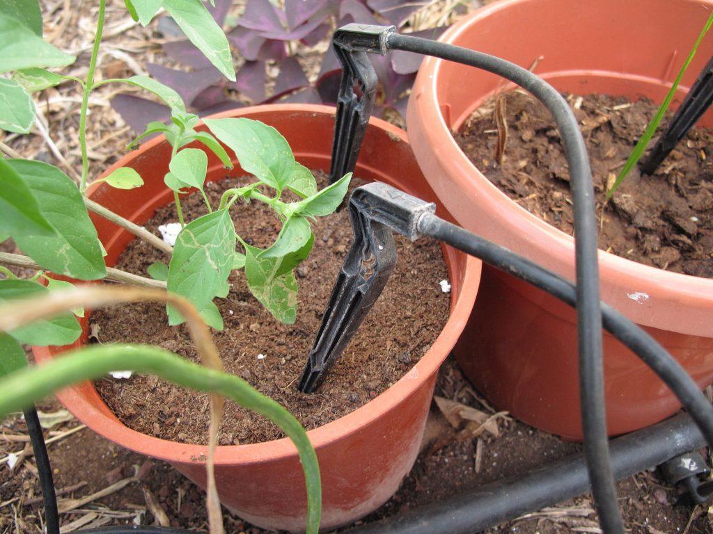 drip_irrigation_at_work