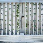 hydroponics vertical growing