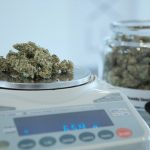weighing marijuana on scales