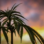Olivia Newton-John on the Benefits of Using Medicinal Cannabis