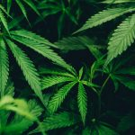 A Guide to Cannabis Laws in Each Australian State