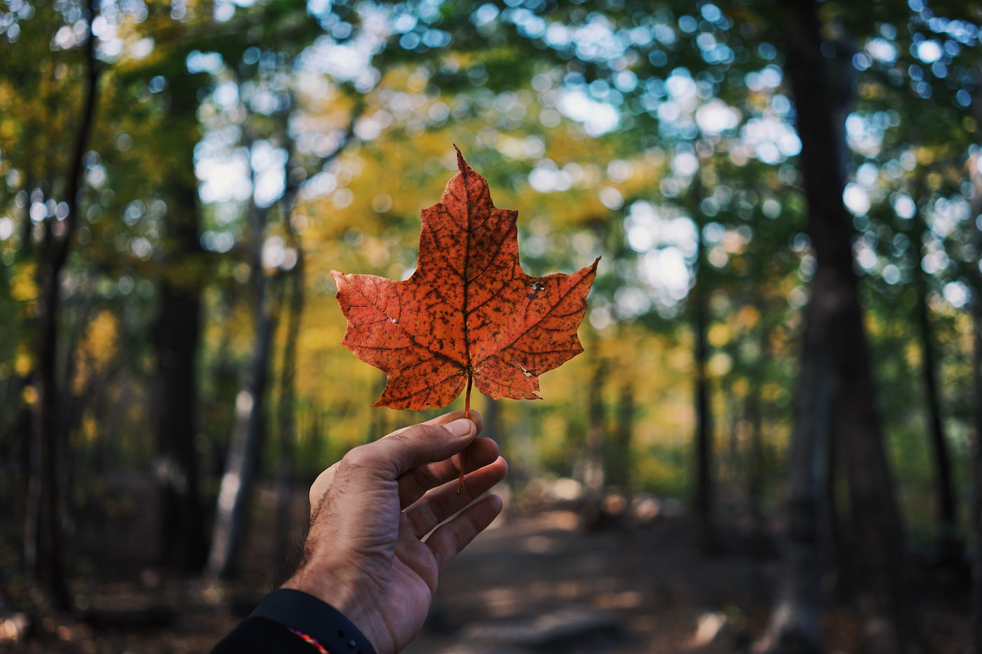 hand holding maple leaf in woods