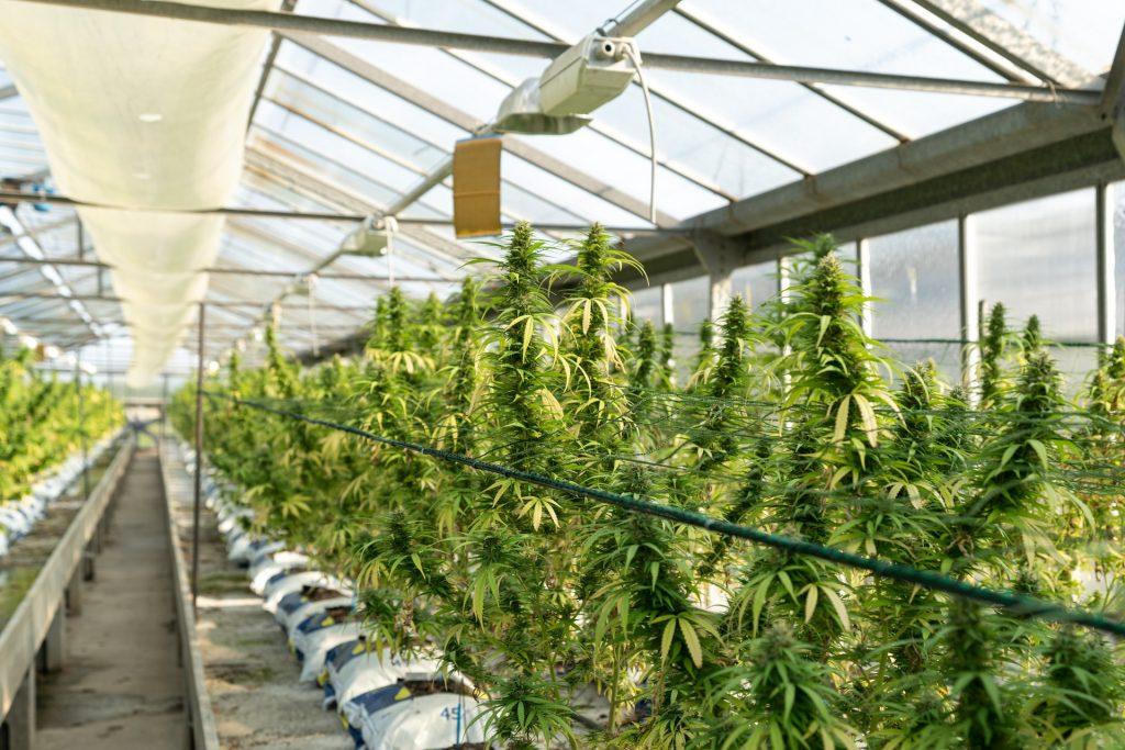 large indoor grow greenhouse