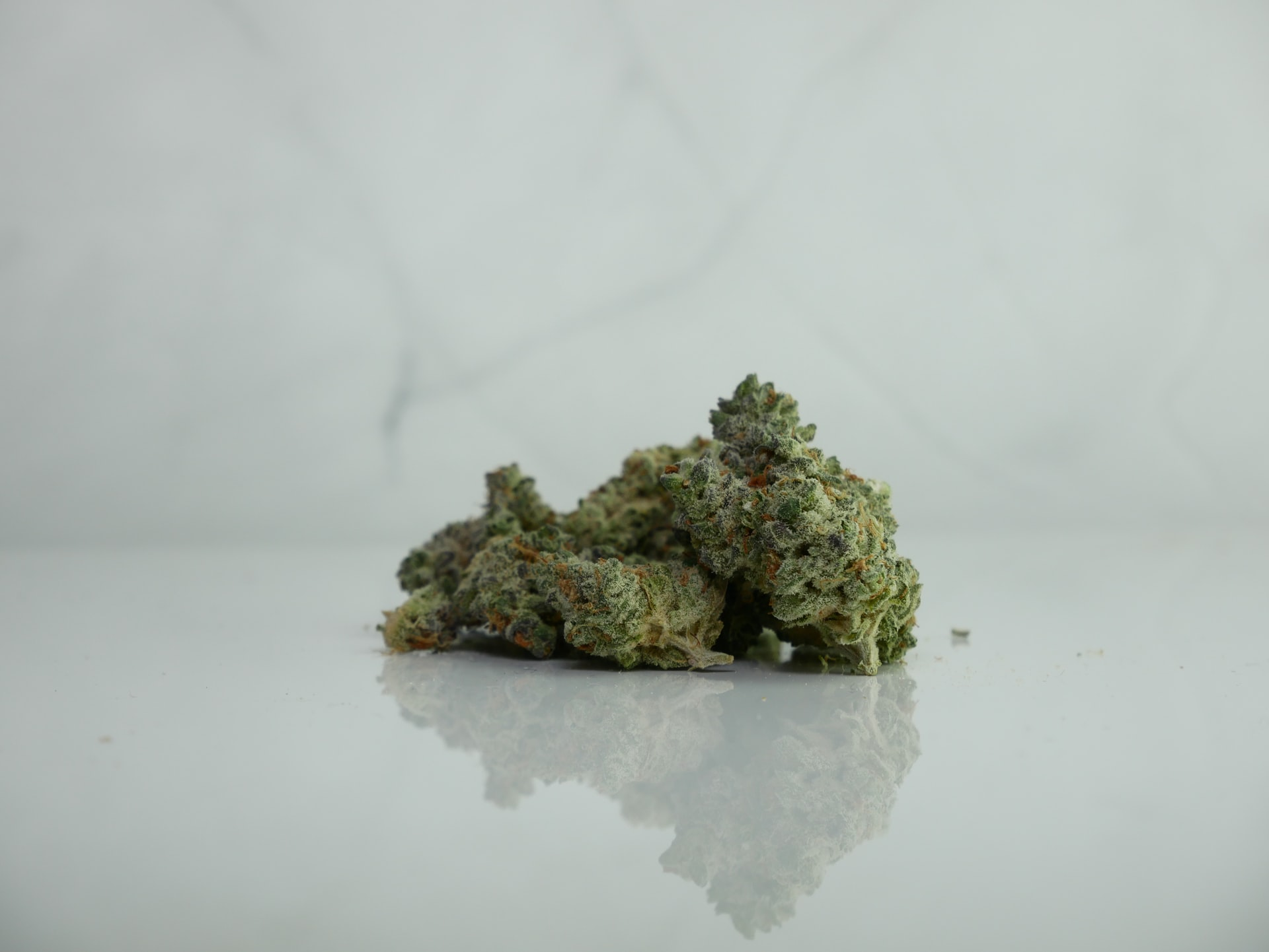 marijuana buds on white surface