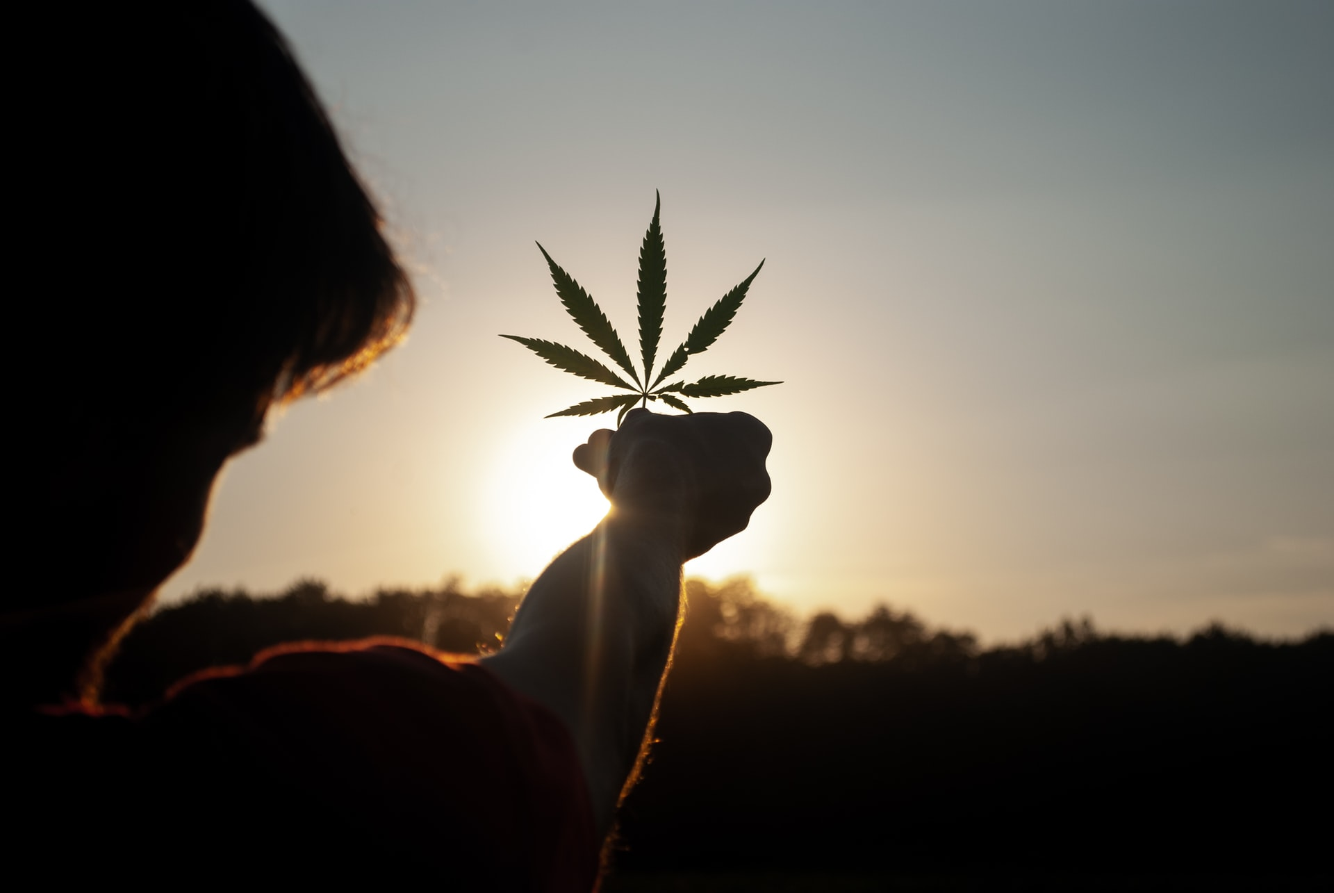 silhouette of person holding cannabis leaf to sky