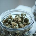 Cannabis Growers in ACT Finding it Hard to Comply with Laws