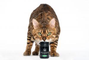cat resting head on CBD bottle