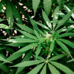 Everything You Should Do Before Growing Your Own Weed