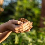 Tips for Growing Cannabis Outdoors