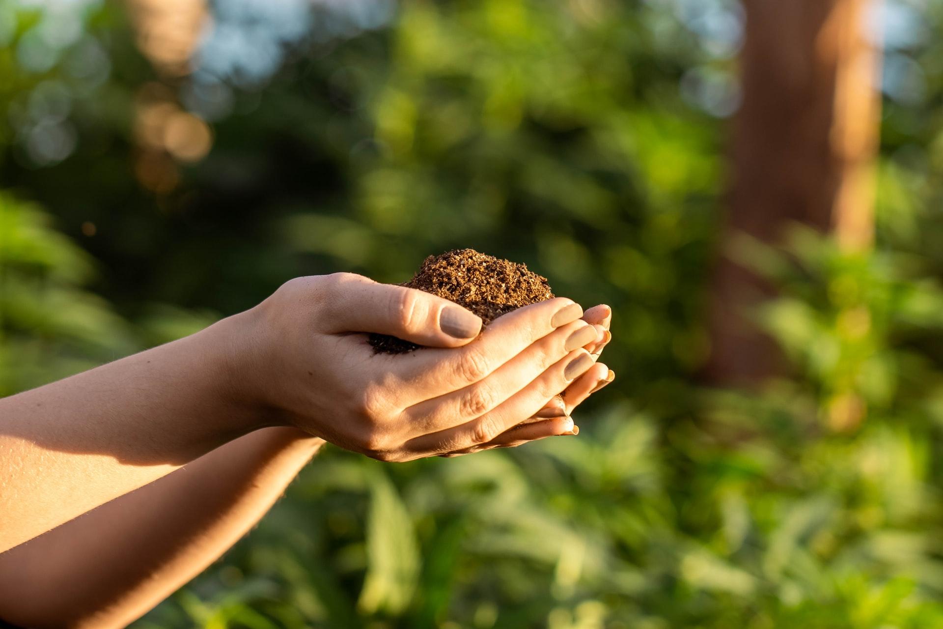 hands holding soil in garden