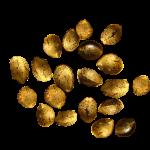 20 Seeds