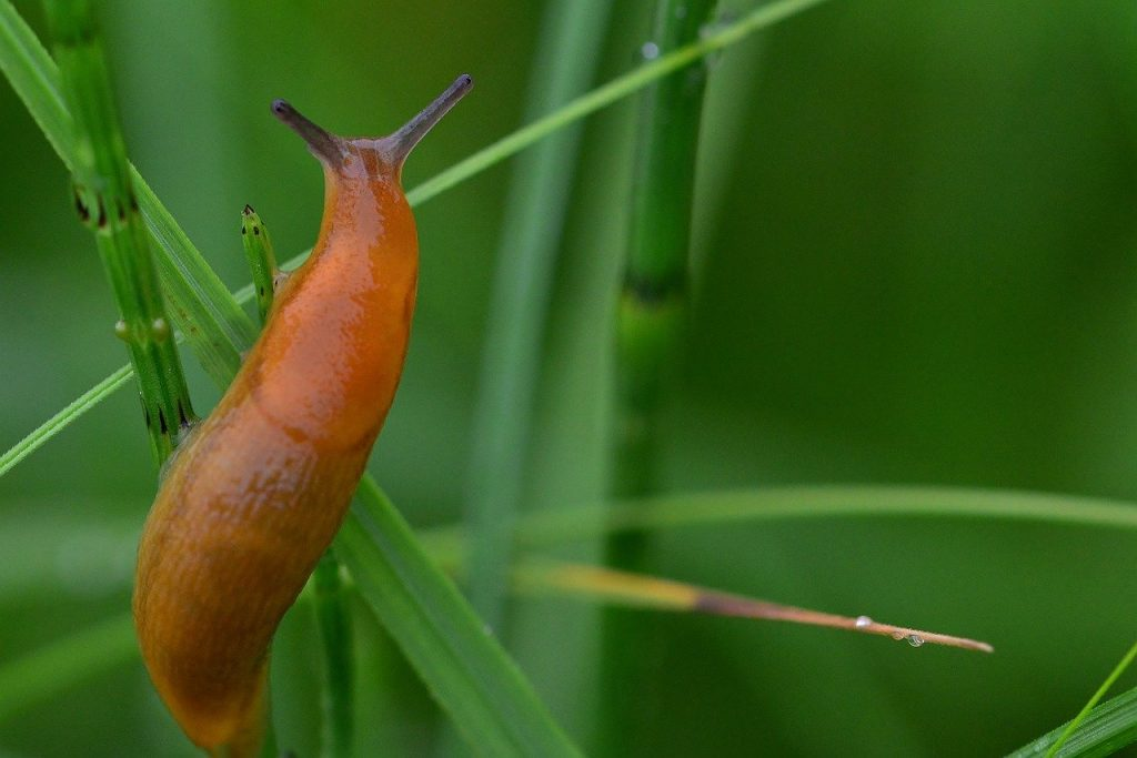 slug on plant