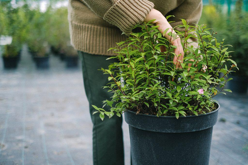 woman checking plant pot