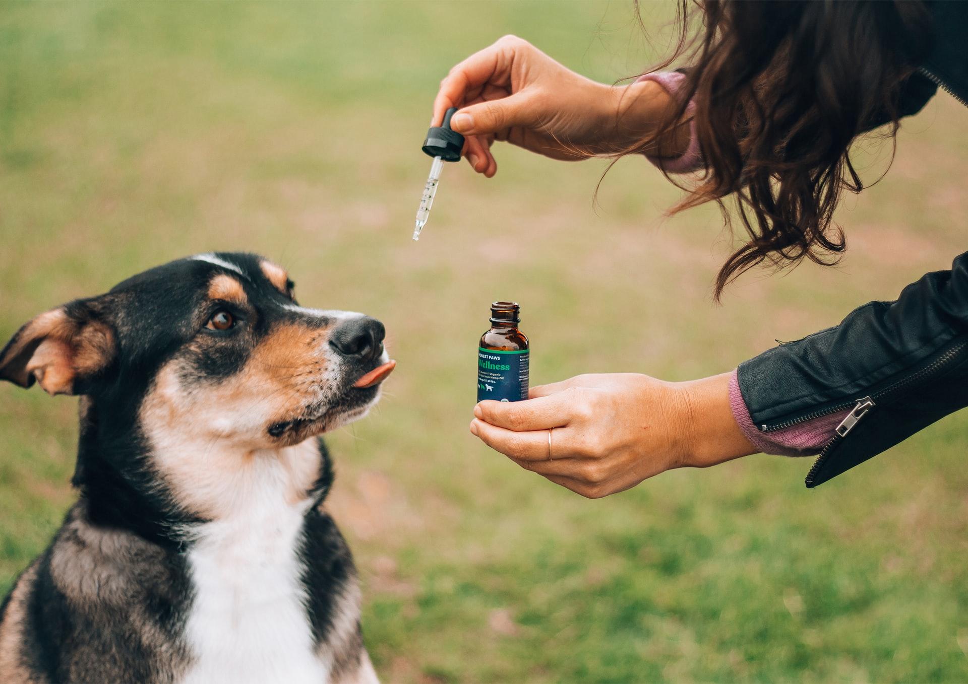 dog having cbd oil