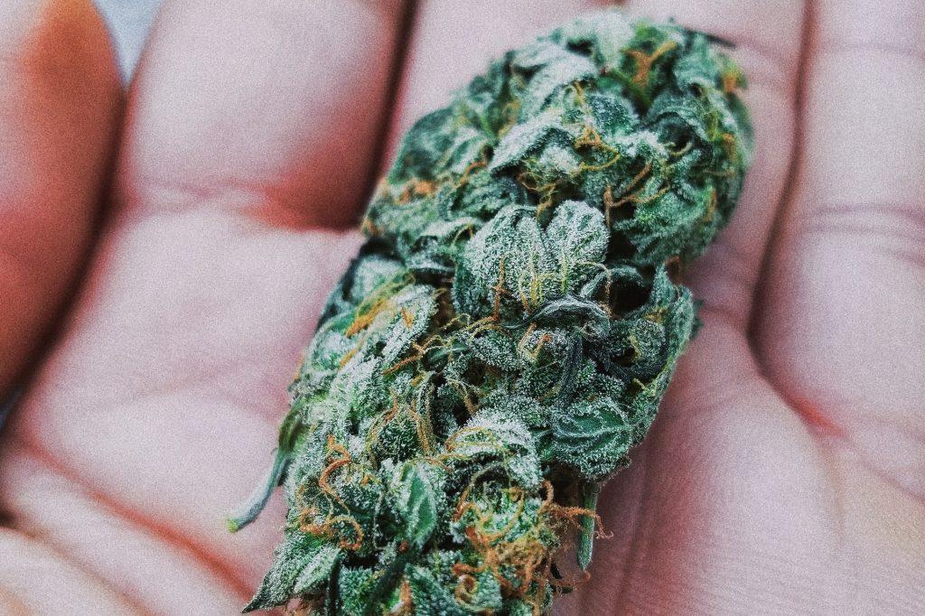 hand holding a cannabis bud