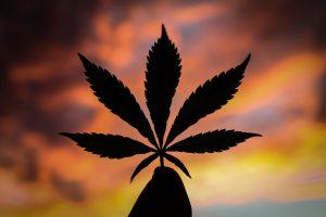 cannabis leaf with sunset sky