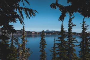 mountain trees in oregon