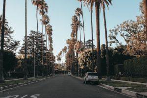 palm lined street LA
