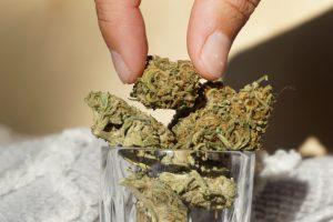 pinching cannabis buds from jar