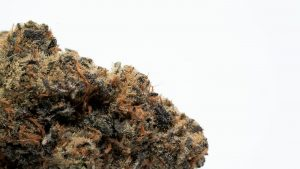 weed buds close up